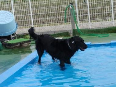 Pool09050413