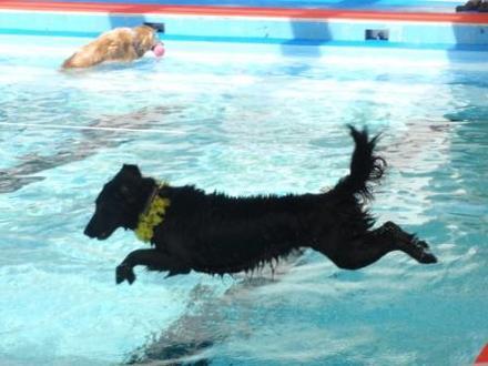 Pool10052204