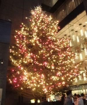 Tree10121401_2