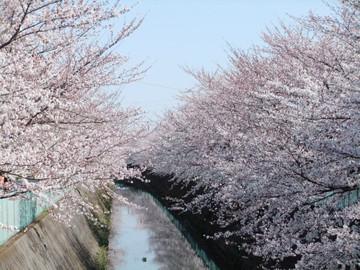Sakura12040802