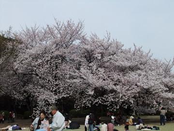 Sakura12041001