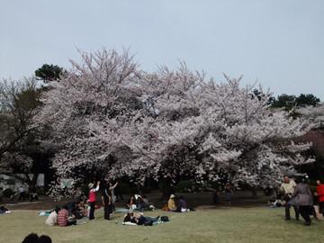 Sakura12041002