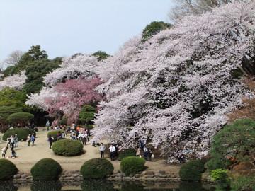 Sakura12041003
