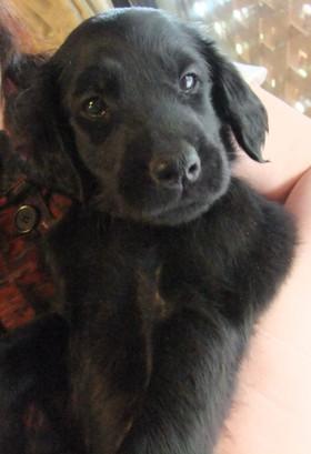 Puppy12051702