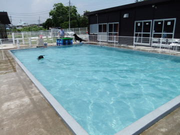 Pool120528