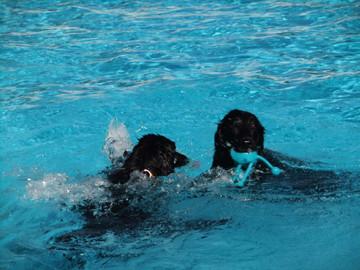 Pool13102101_2