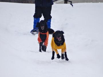 Snow14122901