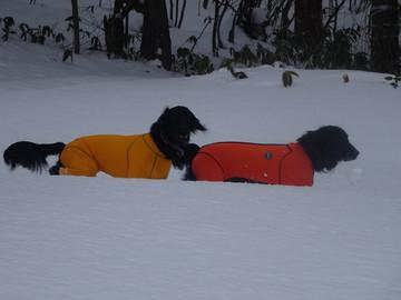 Snow14122902