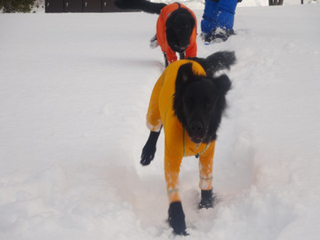 Snow14122903