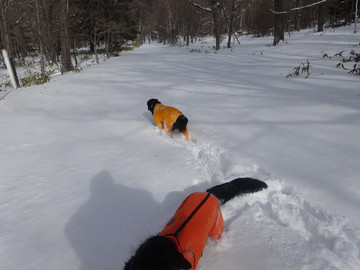 Snow15010201_2