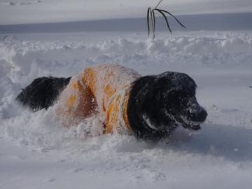 Snow15010205