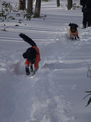 Snow15010207_2